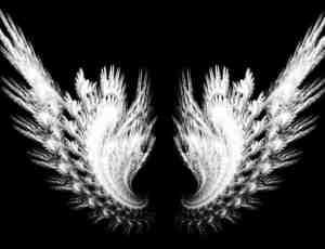 漂亮梦幻的分形翅膀笔刷Photoshop笔刷