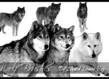 野狼、雪狼Photoshop笔刷素材