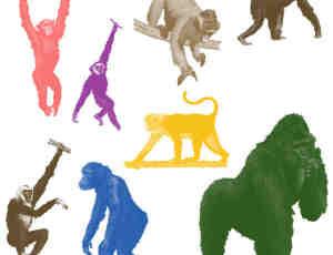 大猩猩、狒狒等猿猴类PS笔刷素材