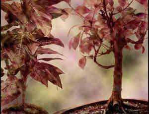 盆景植物树叶PS笔刷