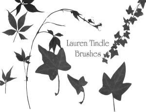 叶子、藤蔓Photoshop植物笔刷