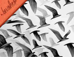 飞鸟、鸟群Photoshop笔刷素材