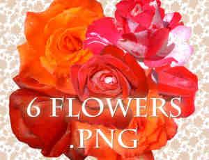 6种玫瑰花朵、鲜花图形Photoshop笔刷(图片格式)