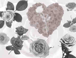 真实的玫瑰花花朵Photoshop笔刷素材