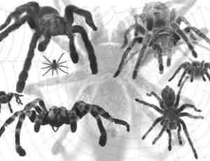 真实蜘蛛PS笔刷