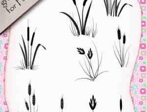 麦穗、野草图形Photoshop笔刷