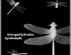 真实的蜻蜓Photoshop笔刷素材