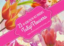 23种真实的郁金香花朵、鲜花Photoshop笔刷素材