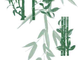 真实竹子、竹节、竹叶Photoshop笔刷素材