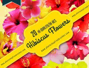 20种高清真实的芙蓉花PS鲜花笔刷
