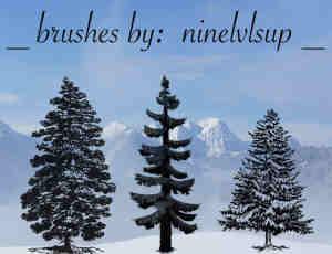 3种松树、雪松、圣诞树Photoshop笔刷下载