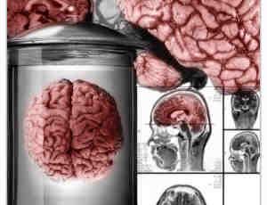 真实的大脑皮层Photoshop笔刷素材