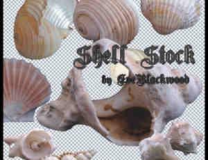 真实海螺、贝壳PS笔刷素材(已扣PNG图片素材)
