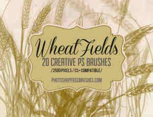 20种麦田麦穗、稻田稻穗图形Photoshop笔刷免费下载