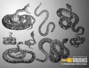 毒蛇、眼镜蛇、银线蛇、响尾蛇Photoshop蛇笔刷素材