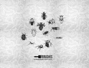 瓢虫、臭虫、蜘蛛Photoshop昆虫笔刷下载