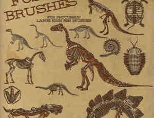 恐龙骨骼、远古巨龟、巨蜥化石、恐龙化石PS笔刷下载