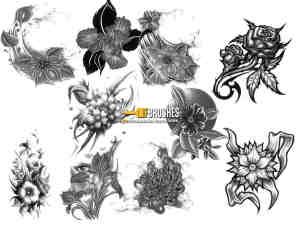 手绘素描式花朵、鲜花图案PS笔刷下载