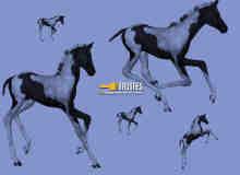 小马驹、马匹PS笔刷下载