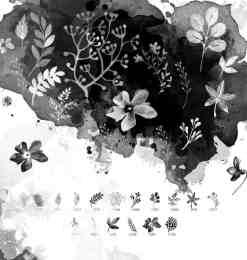 16种水彩花卉、花纹图案PS笔刷下载-花形笔刷 第 16 页