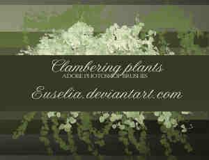 绿意植物藤蔓、藤条绿叶PS笔刷下载