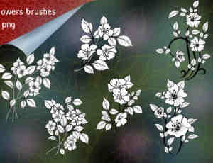 漂亮的鲜花、花朵图案Photoshop花纹笔刷