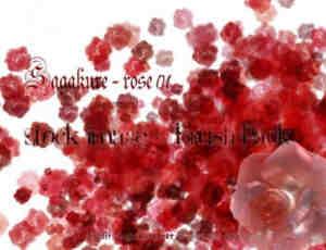 血色玫瑰花朵Photoshop鲜花笔刷