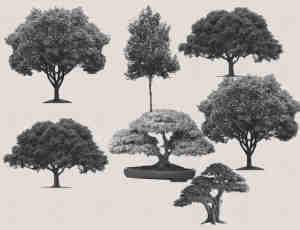 大树、树木、盆栽盆景抠像Photoshop笔刷素材