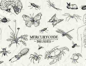 手绘昆虫蝴蝶、蜘蛛、蜻蜓、苍蝇、蟑螂、兔子、蜗牛、乌贼、螃蟹、大脑、人体解剖图等PS素材下载
