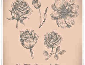 漂亮的手绘玫瑰花、鲜花花朵图案PS花朵笔刷