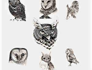 精美的手绘猫头鹰图形Photoshop猫头鹰笔刷