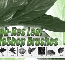 8种高清树叶、植物叶子图形Photoshop笔刷素材下载
