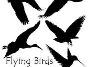 野鸭、蜂鸟、大雁、白鹭等飞鸟剪影图形PS笔刷素材