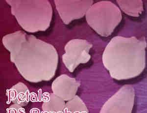 真实的鲜花花瓣图形Photoshop笔刷素材下载