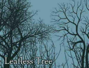 冬天的大树剪影、干枯的树木、光秃秃的树背景PS笔刷素材