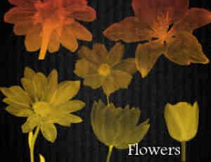 x光透视图鲜花花朵图案Photoshop笔刷素材