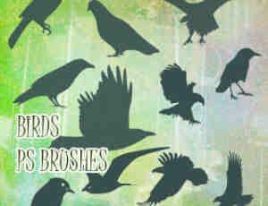 乌鸦鸟类剪影图形Photoshop飞鸟笔刷
