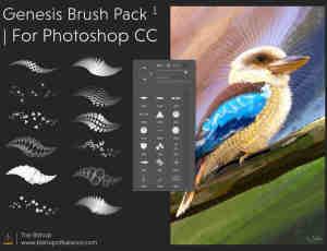 一副关于鸟的插画所需要的绘画笔刷PS素材包下载