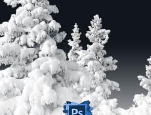 8种高清雪松、雾凇图形Photoshop笔刷素材