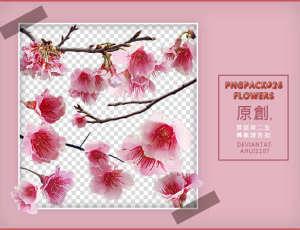 漂亮的梅花花朵、鲜花图案Photoshop鲜花笔刷