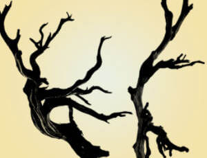 老树枝、树干图形Photoshop大树树木枝干笔刷素材