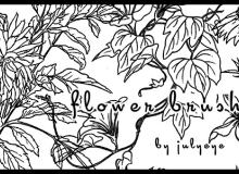 植物树叶、鲜花线框图形PS笔刷素材