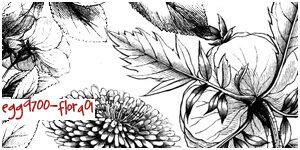 素描式手绘植物花纹图案Photoshop笔刷素材下载-植物笔刷