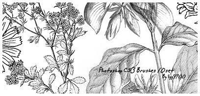 漂亮的手绘素描式植物花纹图案PS笔刷素材下载