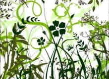 向量植物笔刷