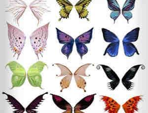 七彩蝴蝶翅膀笔刷