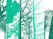 Photoshop树木笔刷