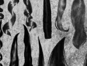 多种卷发直发笔刷