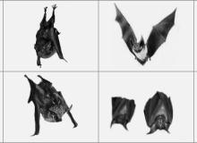 恐怖的蝙蝠笔刷
