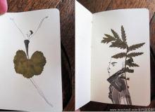 树叶标本与艺术创作